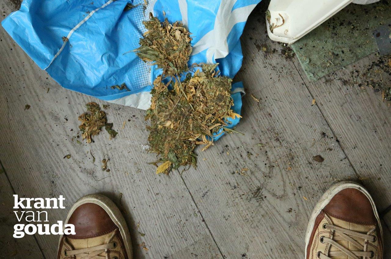 wietplantage (3)a